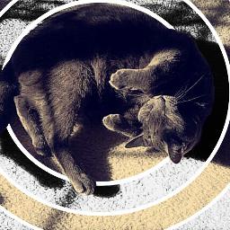 cat cats cute interesting photography freetoedit