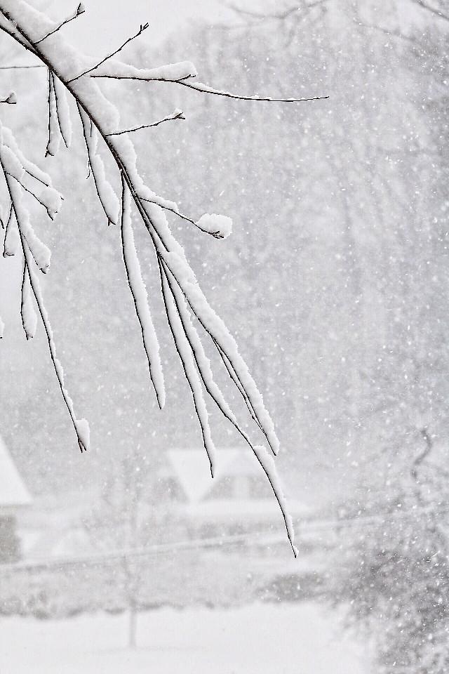 #dpcwinter #FreeToEdit #snow #blizzard #dpcsnow #dpcwhite #pcwhite
