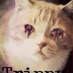 cat art trippy muchroom multicolor