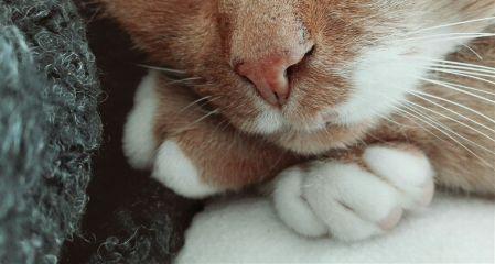 cat detail cute pets freetoedit