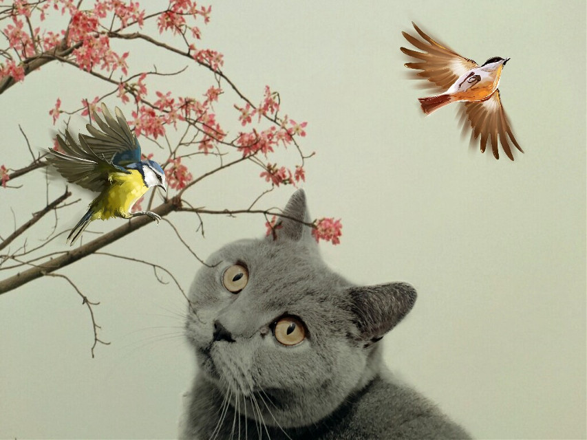 FEATURED ✌😘 thank you @pa   #FreeToEdit  #edited #cat #birds #clipart #flowers Op @smile_b8ara and  @qiuli123