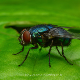 fly nature photography picture fujinon