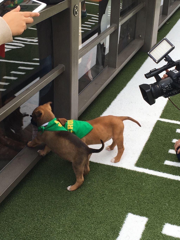 #puppybowl #superbowl #biggame #FreeToEdit