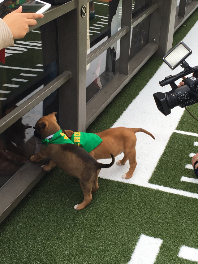 #puppybowl #superbowl #biggame #FreeToEdit