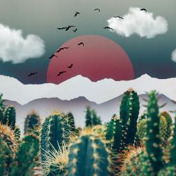 FreeToEdit cactus cacti horizon mountains sun clouds edited myedit madewithpicsart