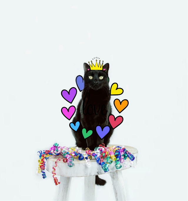 #FreeToEdit #cat #colours #confetti
