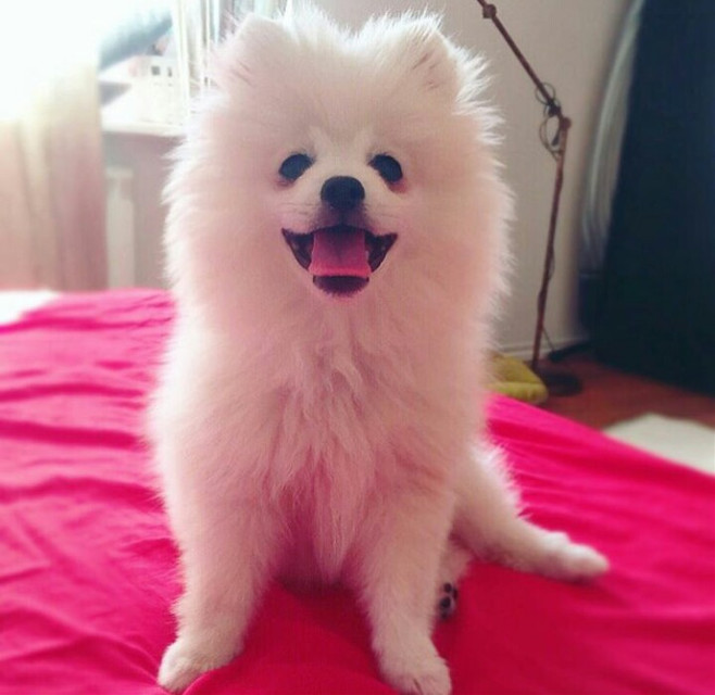My lovely ❤💖 #dog #dogs  #smile #baby #girl #love #happy #happiness #like #enjoyed #lifeisgood  #life #lifestyle #fashion #model #style #beauty #fashion #black   #fashionista #favorite #dress #dress_style #I #I'm  #smile #happiness #happy  #photography #photo #girl #followback #follow #like #nice #good #cool #cute #love #selfie #likes4likes  #inspiration #likeforlike #likeaboss #picsart #people #photo #glitter #goodmorning #morning #life #nature #summer #birthday #baby #balloon  #sea  #sunshine  #newyear #2017 #santa  #photography  #good#cool #like #colorful #baby #girl   #parislover #parisfrance #parisatnight #FreeToEdit  #retro  #life  #lifestyle #travel  #colorful  #parisianlife  #vintage  #people  #nature  #oldphoto  #emotions  #love #travel  #cute