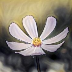 freetoedit flores flower