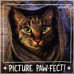 nutrish pawfect cat