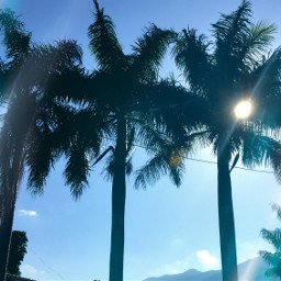 palmtrees flare blusesky photography freetoedit