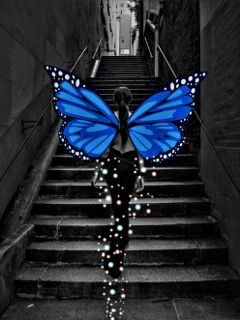drawing retroeffect butterfly star beautiful