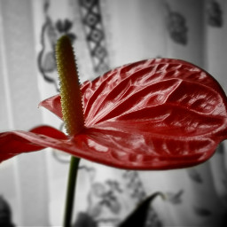blackandwhite colorsplash colorful freetoedit photography