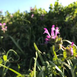 freetoedit flower nature grassflower sky