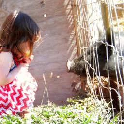 freetoedit agirl farmlife pig summer