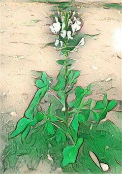 freetoedit greenish stpatricksday plants flower