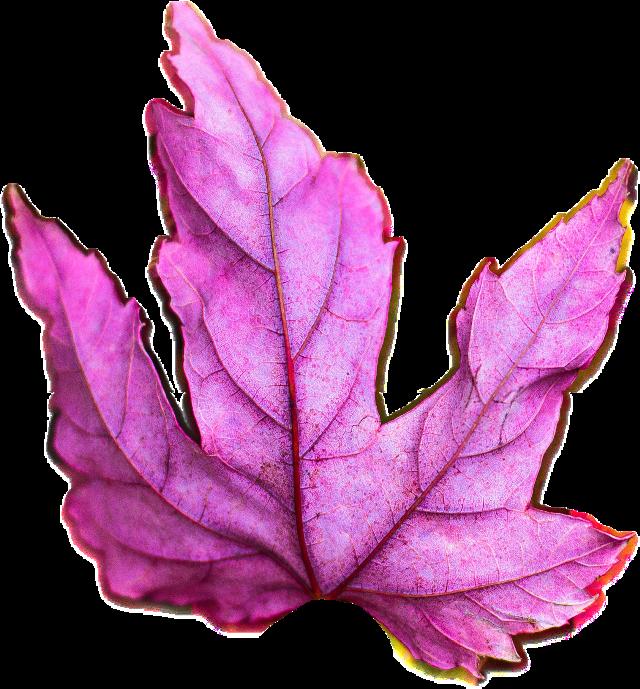 #FreeToEdit #ftestickers #leaf