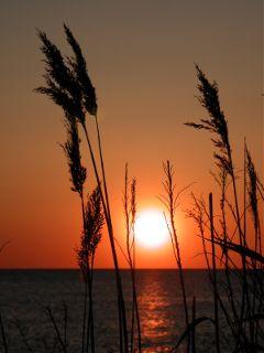 summer sky sunsetsilhouette sunshine newjersey