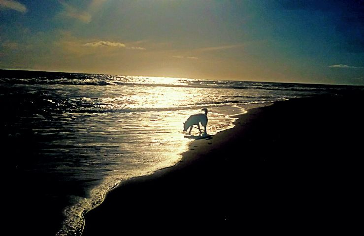 freetoedit day ocean water my