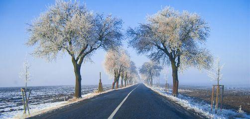 ontheroad frozen tree