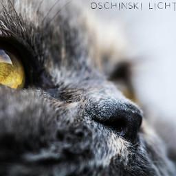 colorful photography petsandanimals love cat dpcanimaleyes pceyecloseup