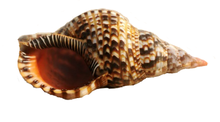 ftestickers shell freetoedit remixit