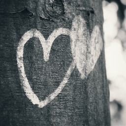 photography blackandwhite bluefilter love bestfriend hearts art tree nature park city streets spring germany