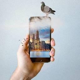 FreeToEdit phone pigeon birds city clouds water buildings pa picsart